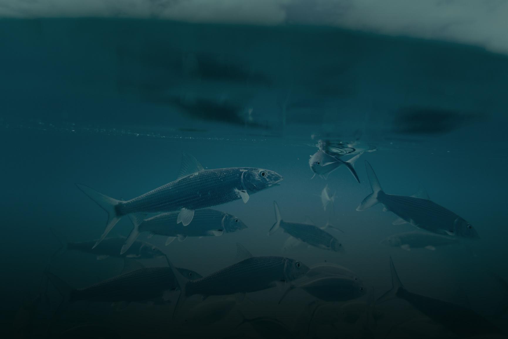 navicus_fishing_law